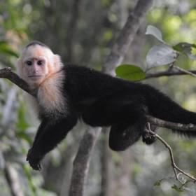 Что общего между человеком с джойстиком и обезьяной с лопаткой?