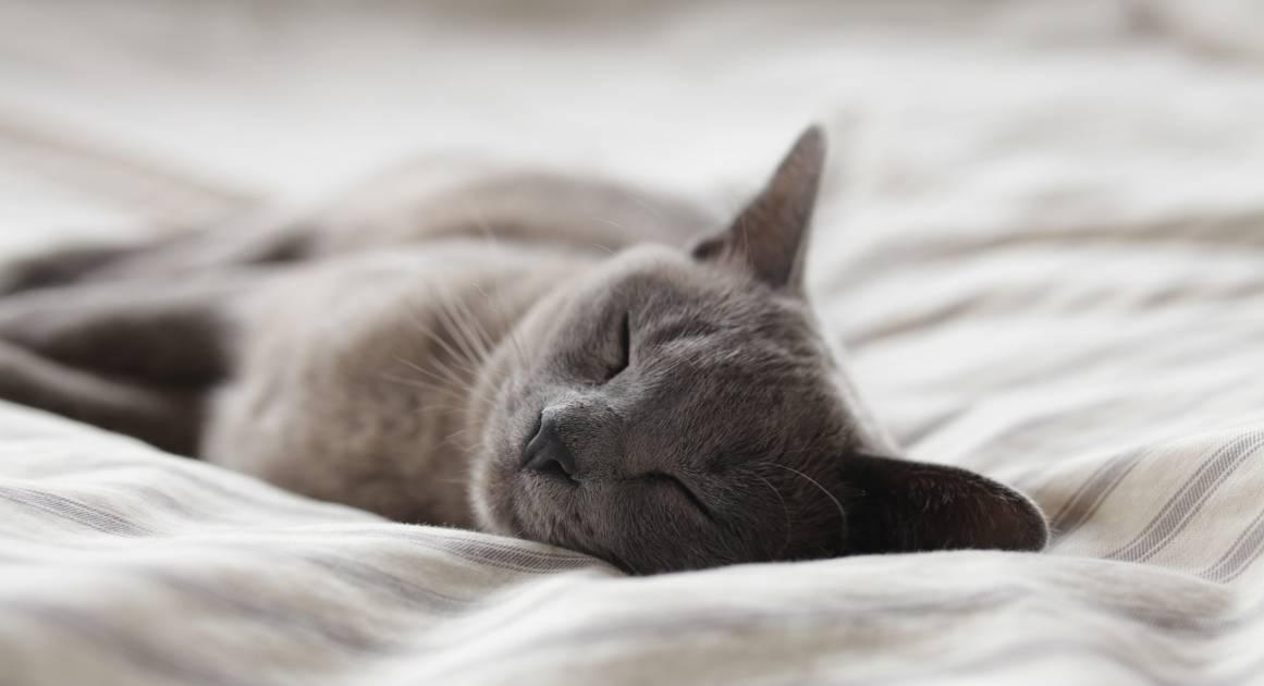 Как устроен механизм сна — и что в нем может сломаться?