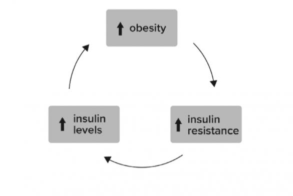 Замкнутый круг инсулинорезистентности: больше инсулина — больше жировых отложений — еще больше инсулина…