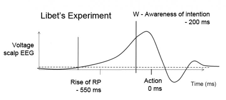 Схема эксперимента Либета: нарастание потенциала готовности (BP) в двигательной коре мозга — осознание принятого решения (W) — движение руки (Action).