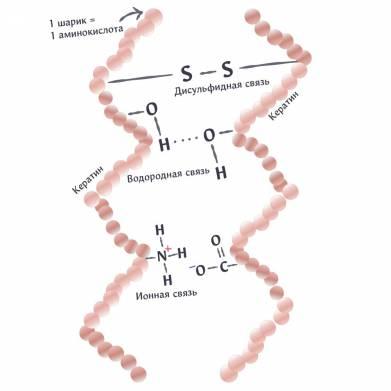 Упрощенное изображение трех видов связей между цепочками кератина