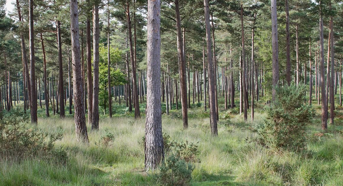 Почему нам всем стоит почаще гулять в лесу